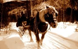 sleigh horse